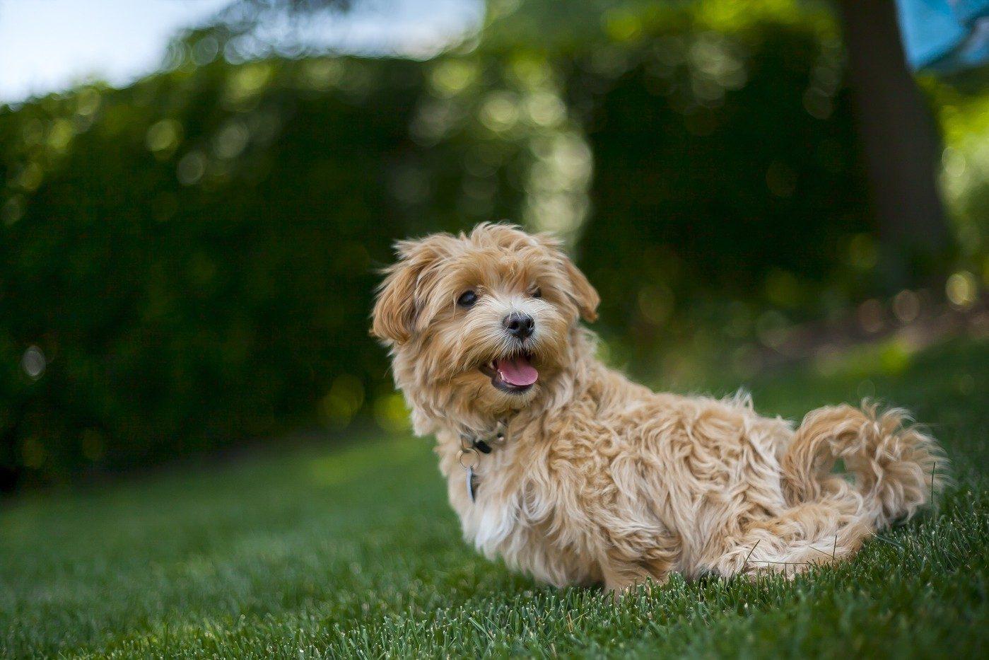 Soleil chien