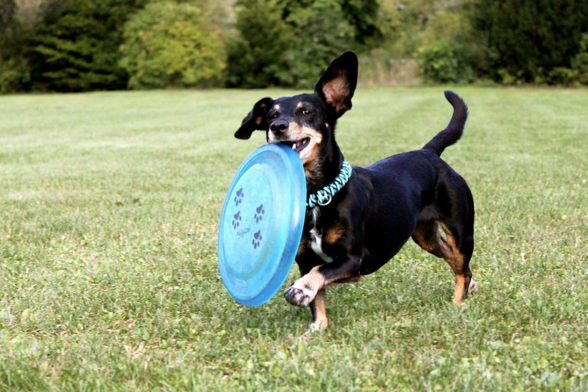 activite-sportive-chien